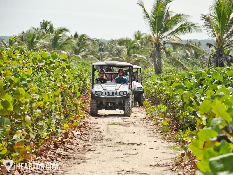 Driving the buggies on a narrow dust road