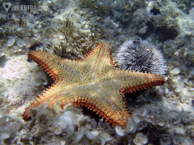 Starfish at the bottom of the ocean