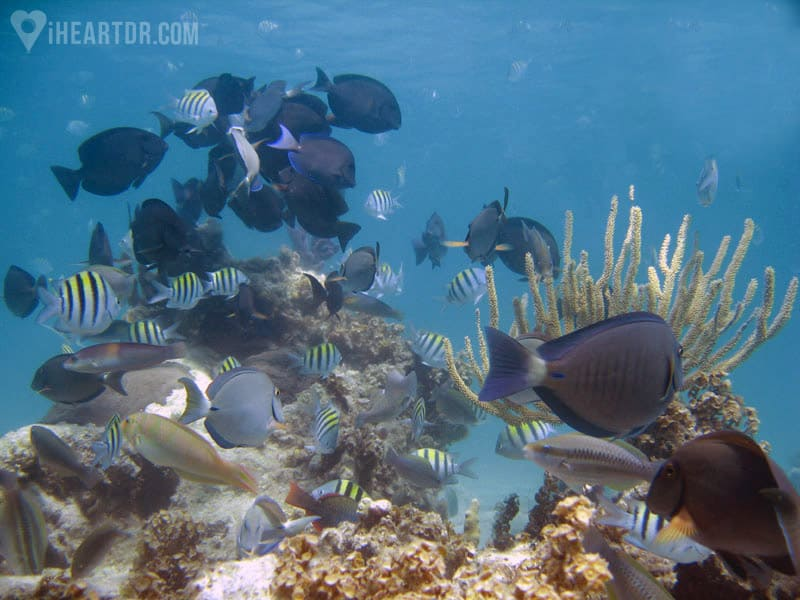 Tropical fishes swimming in the coral reef