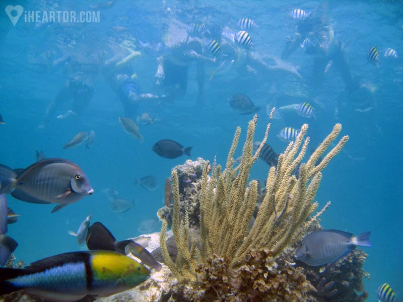 Coral reef and tropical fishes with people snorkeling above