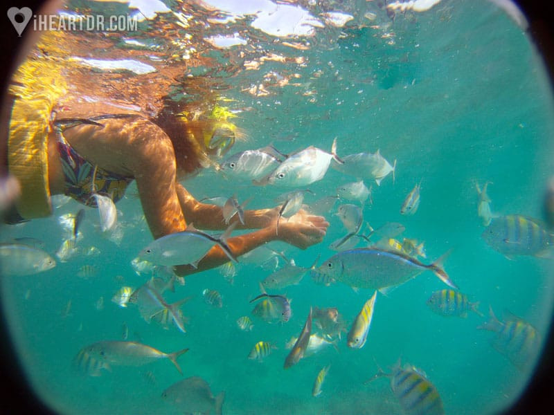 Woman snorkeling amongst tropical fishes