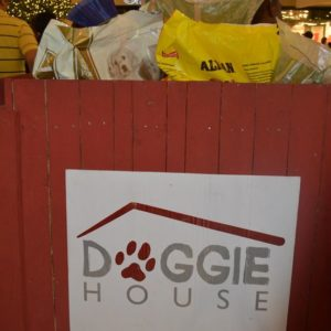 Donating to the Doggie House Foundation - Box full of goods