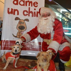 Donation to the Doggie House Foundation - Santa Claus and two cute dogs