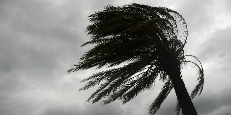 Palm tree being blown by the wind